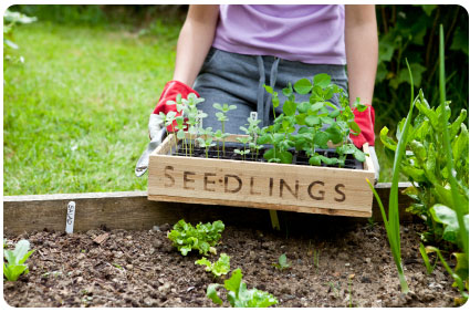 Seed Packets Source · Jump Start Your Garden How To Save On The Price Of  Seeds The