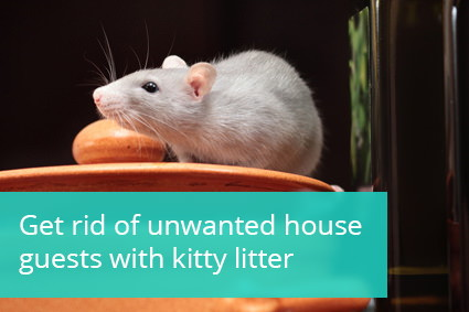 How To Get Rid Of A Cat Humanely
