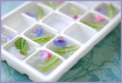 ice-cubes-3-425x285