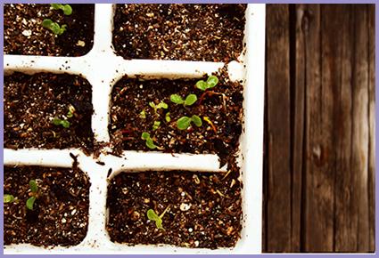 seed-starter