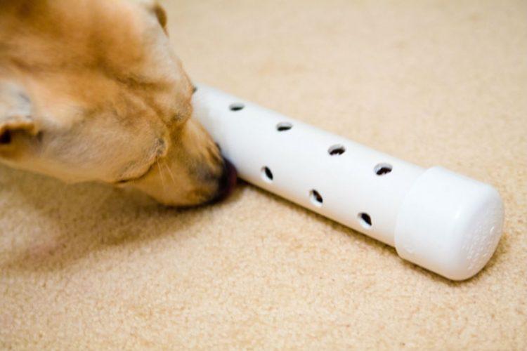 Long Lasting Dog Toys