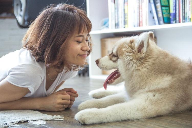 Make up to $600 ($200 per month) when you pet-sit dogs with DogVacay.
