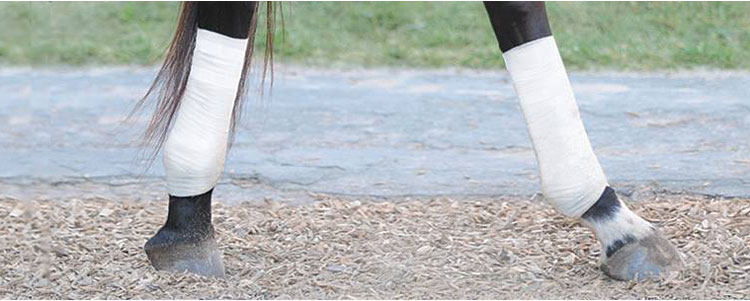 Tack Wrap for Horses