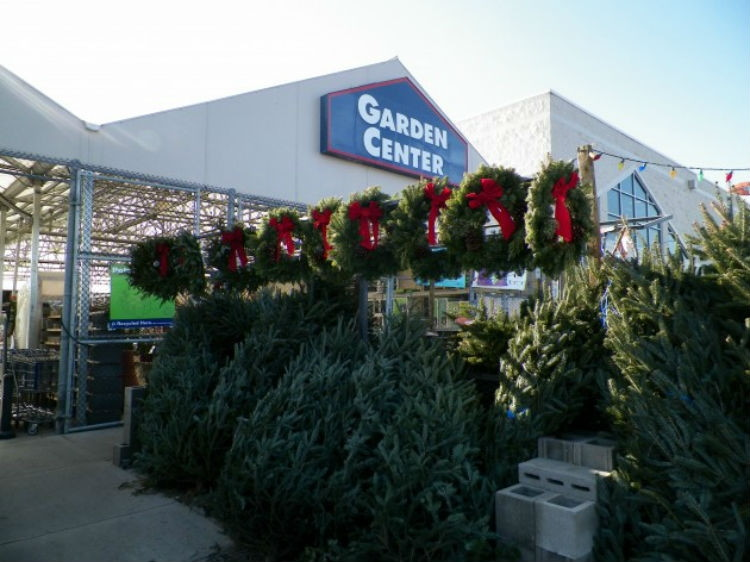 The Ultimate Christmas Tree Buying & Care Guide - The Krazy Coupon ...