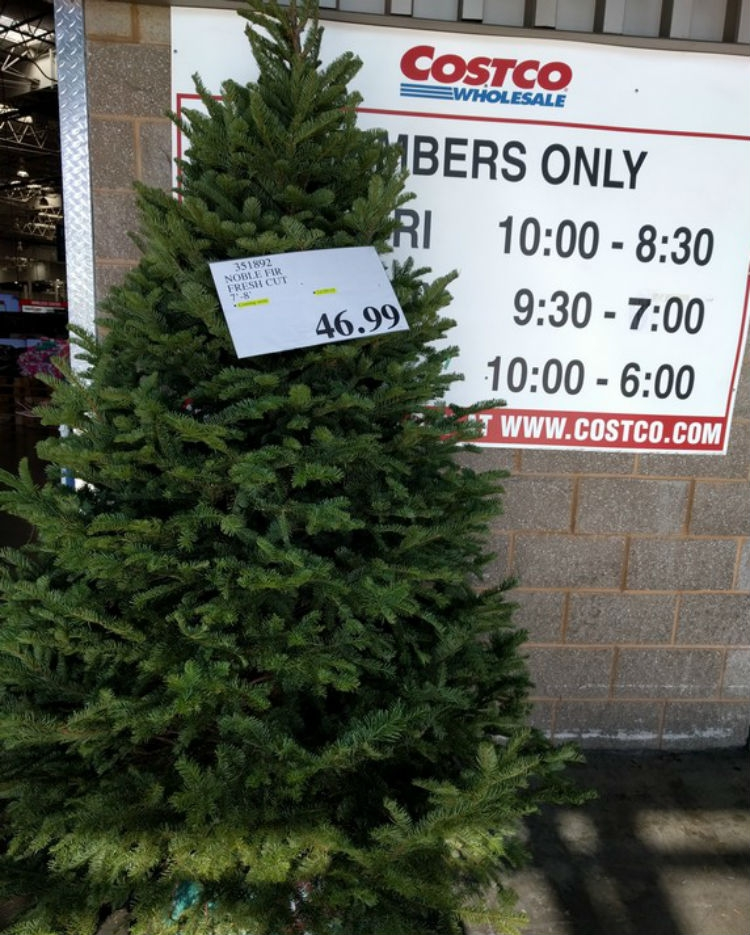 Costco Christmas Tree Sale Rainforest Islands Ferry