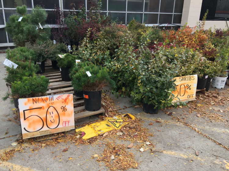 50% Off Trees, Shrubs & Succulents at Home Depot–Check Your