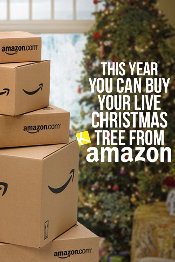 5dfea64db Amazon Wants to Sell You a Live Christmas Tree This Year - The Krazy ...
