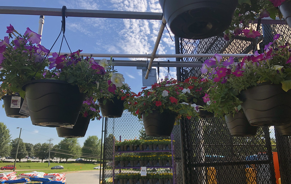 $5 Hanging Flower Baskets at Home Depot & Lowe's! - The